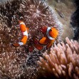 Pencarian Tempat Menginap yang Murah di Pulau Gili